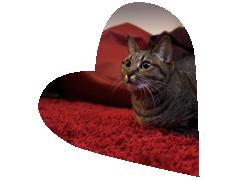Eikö sinulle sopivaa kissa löytynyt näistä? Jätä oma hakuilmoituksesi!