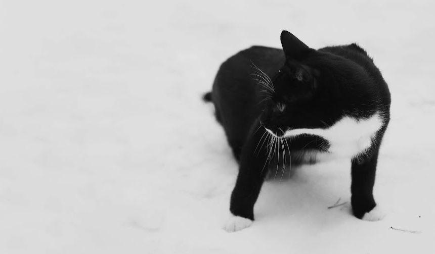 Älä hylkää kissaystävää syksyn tullen