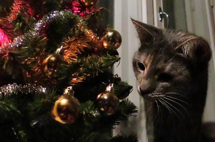 Joulu kissan silmin