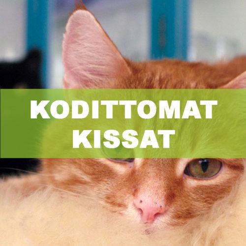 Kodittomat kissat -Kisu ry