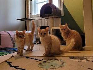 Nekku ja 3 pentua, Porvoo
